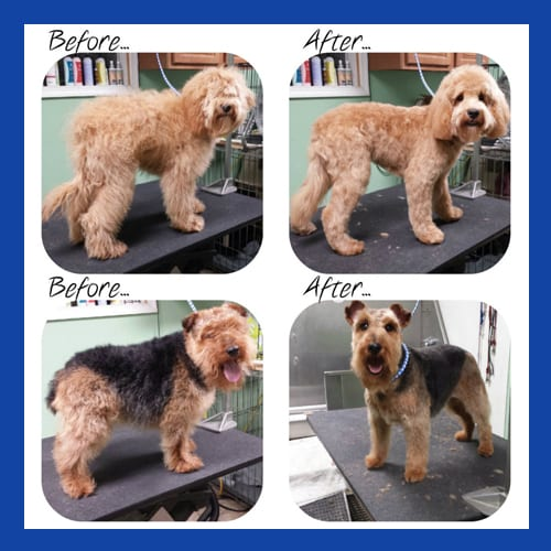 Before & After Dog Grooming in Allentown, PA